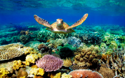 The Great Barrier Reef is dying for green grace. The earth cries out for justice.